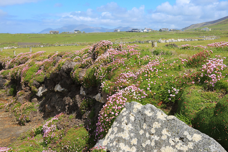 A Look Back From Clogher