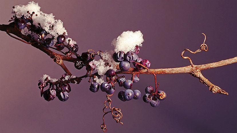 2C7A8705-wild-winter-grapes-FB-cover.jpg