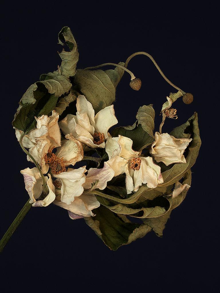 elegy-of-an-anemone-two-LR.jpg